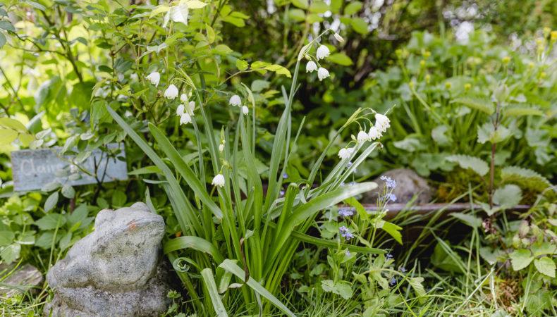 Gartenglück im Mai oder Schneeball ohne Läuse