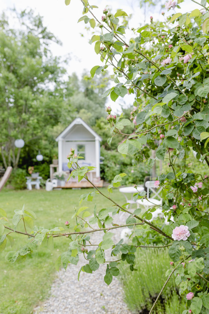 Garten Anfang Juni, Pomponetti
