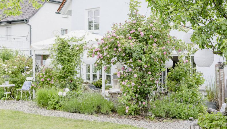 Rosengarten im Juni… meine schönsten Rosensorten