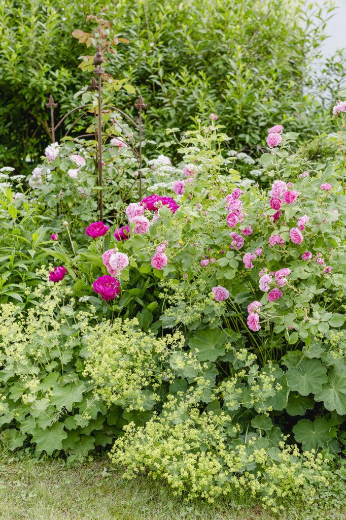 Rosengarten im Juni, Pomponetti