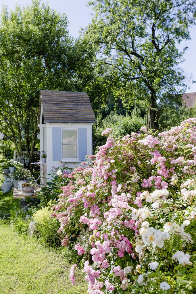 Gartenlaube mit Rosen