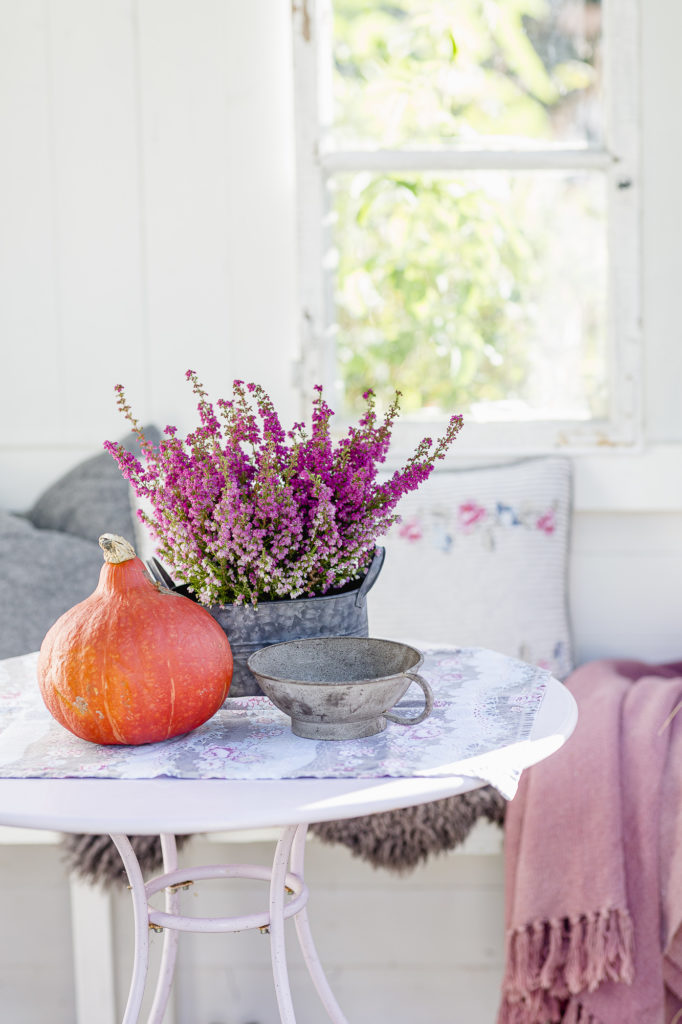Herbstdekoration, Pomponetti