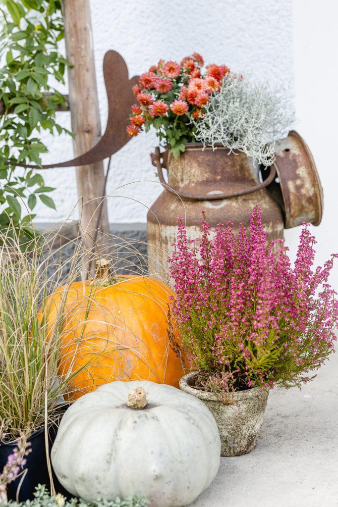 Herbstdeko, Pomponetti