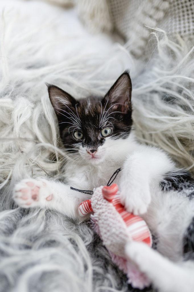 Babykatze Mia, Pomponetti