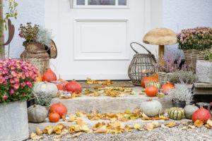 Herbstgarten Ende Oktober, Pomponetti