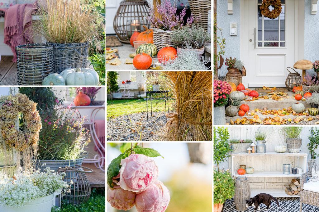 Jahresrückblick 2019, Pomponetti, Garten Herbst