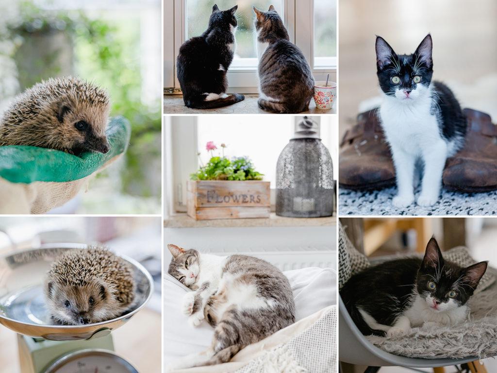 Jahresrückblick 2019, Pomponetti, Tiere