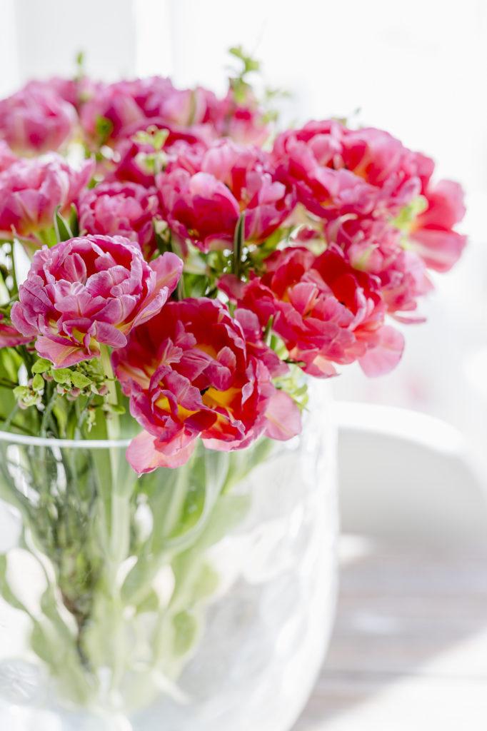 Gefüllte Tulpen, Pomponetti