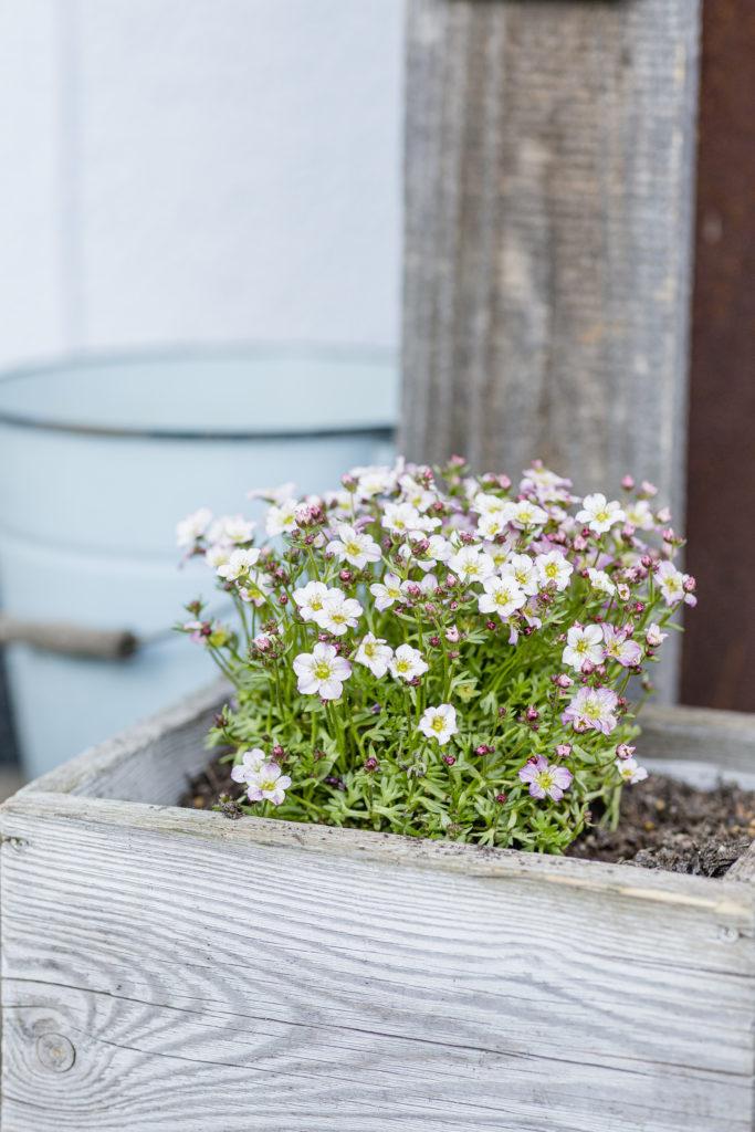 Frühlingsdeko auf Terrasse, Pomponetti