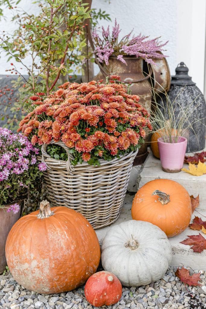Herbst, Kürbisdeko, Pomponetti