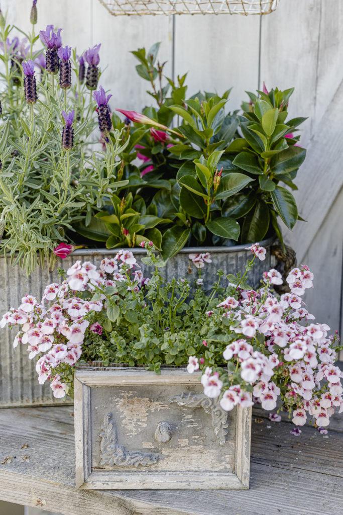 Gartenimpressionen, Pomponetti