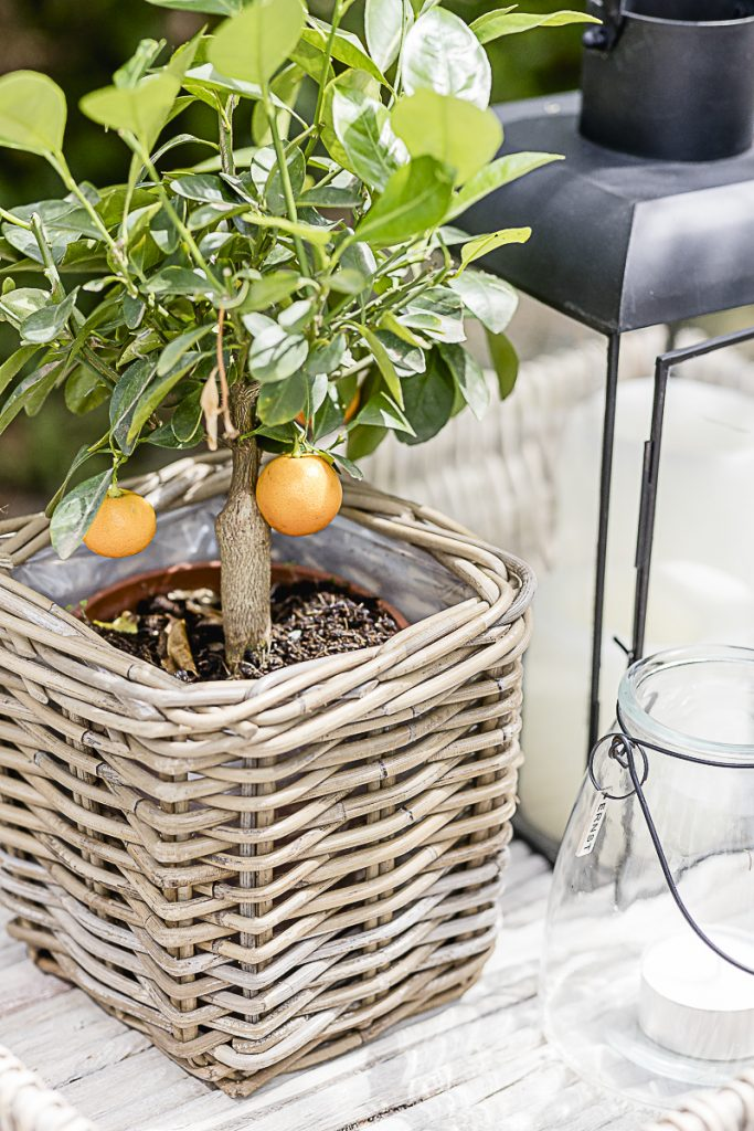 Mandarinenbäumchen, Pomponetti